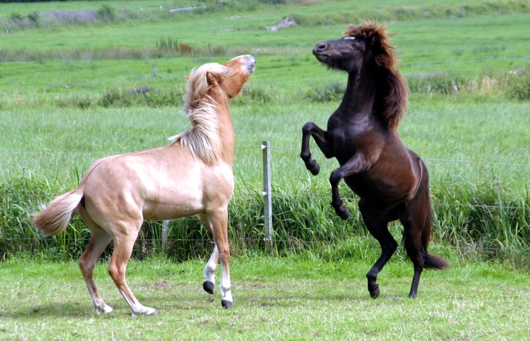 pferde zum spielen